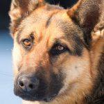 dog-3-250x150
